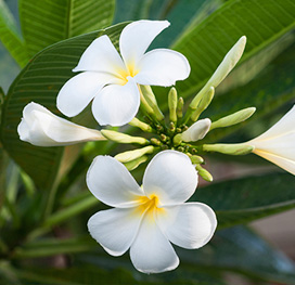 side-flowers-white.jpg